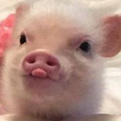 PiggiesGoMoo